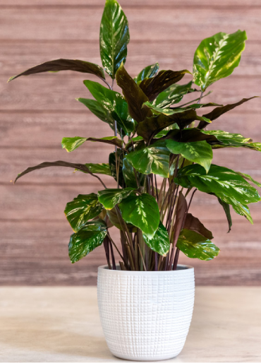 POT PLANTS IN USA || POT PLANTS IN UNITED STATES