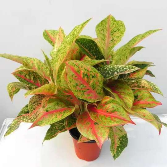 PLANT TISSUE CULTURE IN WASHINGTON